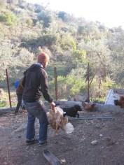 Chicken chasing!