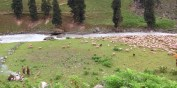 Kashmiri shepherds