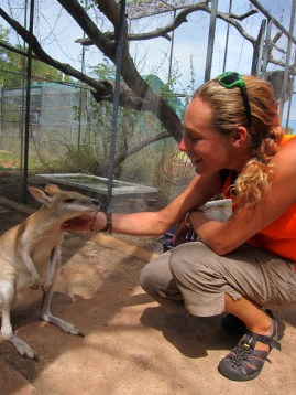 Alice makes firm friends with a wallaby