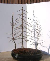Larch Group