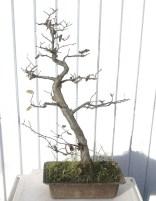 auction-hornbeam-22