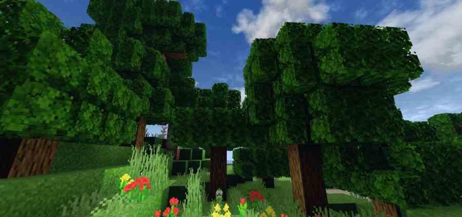 Better foliage