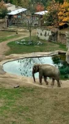 MCHS Zoo