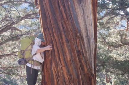 Patti hugging a giant tree