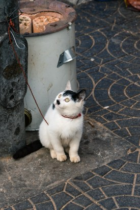 Pictures of Playful Kitten in Xian China by Mary Catherine Messner