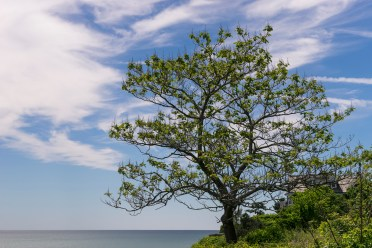 Pictures of Cliff Walk in Newport Rhode Island by mcmessner Mary Catherine Messner