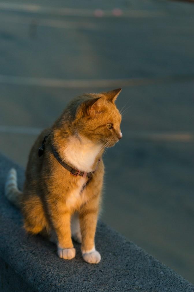 Picture of animal views on Balboa Island and Balboa Peninsula, Newport Beach, California, USA.