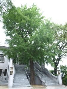 templo Hosen-ji