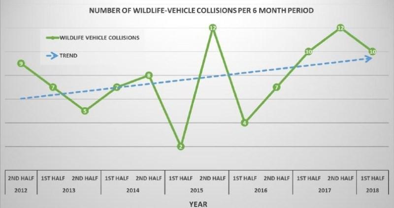 wildlife-vehicle collisions graph