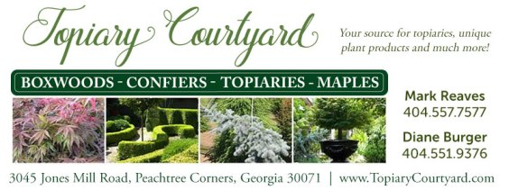 topiary courtyard specimen plants