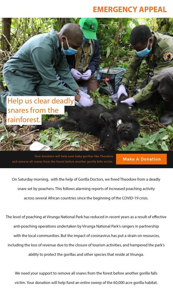 Virunga rangers save baby gorilla