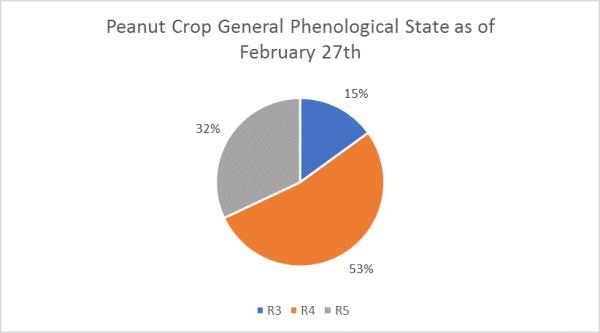 peanut crop general phenological