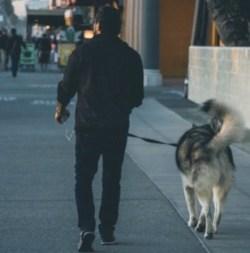 multitasking while walking the dog