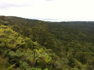 Kauri Forest in New Zealand National Park