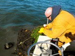 Captain Ralph Tarr recovers a ghost crab trap from the bay floor.
