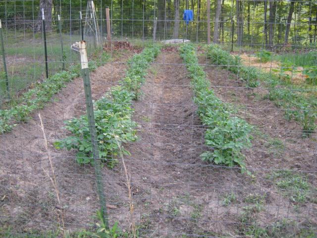 gardening on the homestead