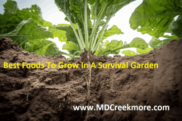 best foods to grow for survival