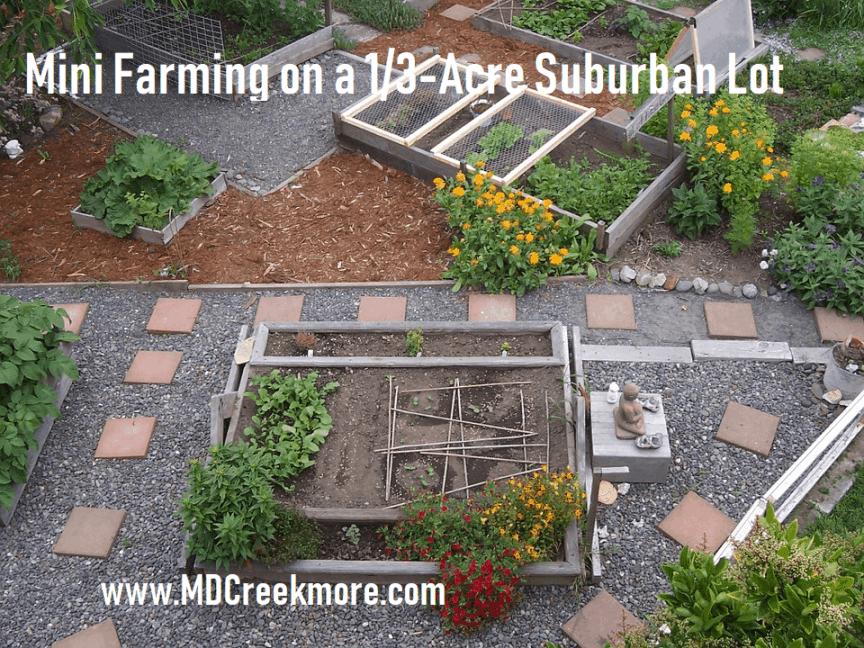 Mini Farming on a 1/3-Acre Suburban Lot