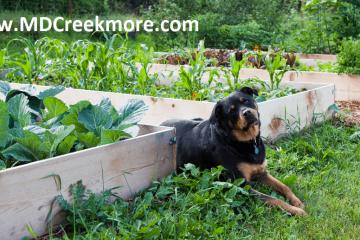 vegetable garden ideas for small spaces