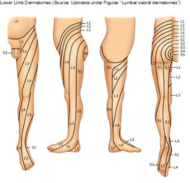 lowerlimbdermatomes
