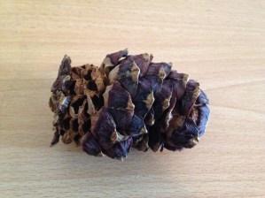 Pine nuts 3