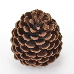 Pine nuts 9