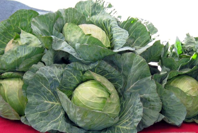 I wonder if Mr Duffy's cabbages looked as good as these do?