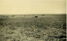 Dead horses from the 3rd Light Horse Brigade
