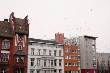Pájaros y casas de Berlín