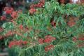 Beebeetreebranches