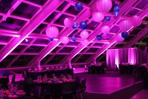 Fuchsia and Purple Lanterns at Adler