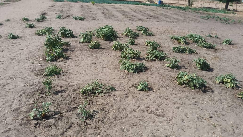 Jardins de N'Diafatte Sérère juin 2018