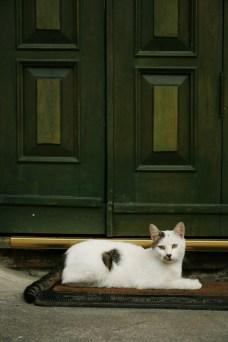 Pisicile otomane