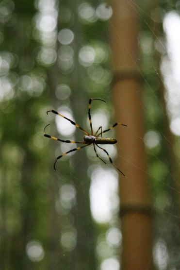 Pădurea de bambus Sagatenryuji Tateishicho ( 35.018009, 135.674208 )