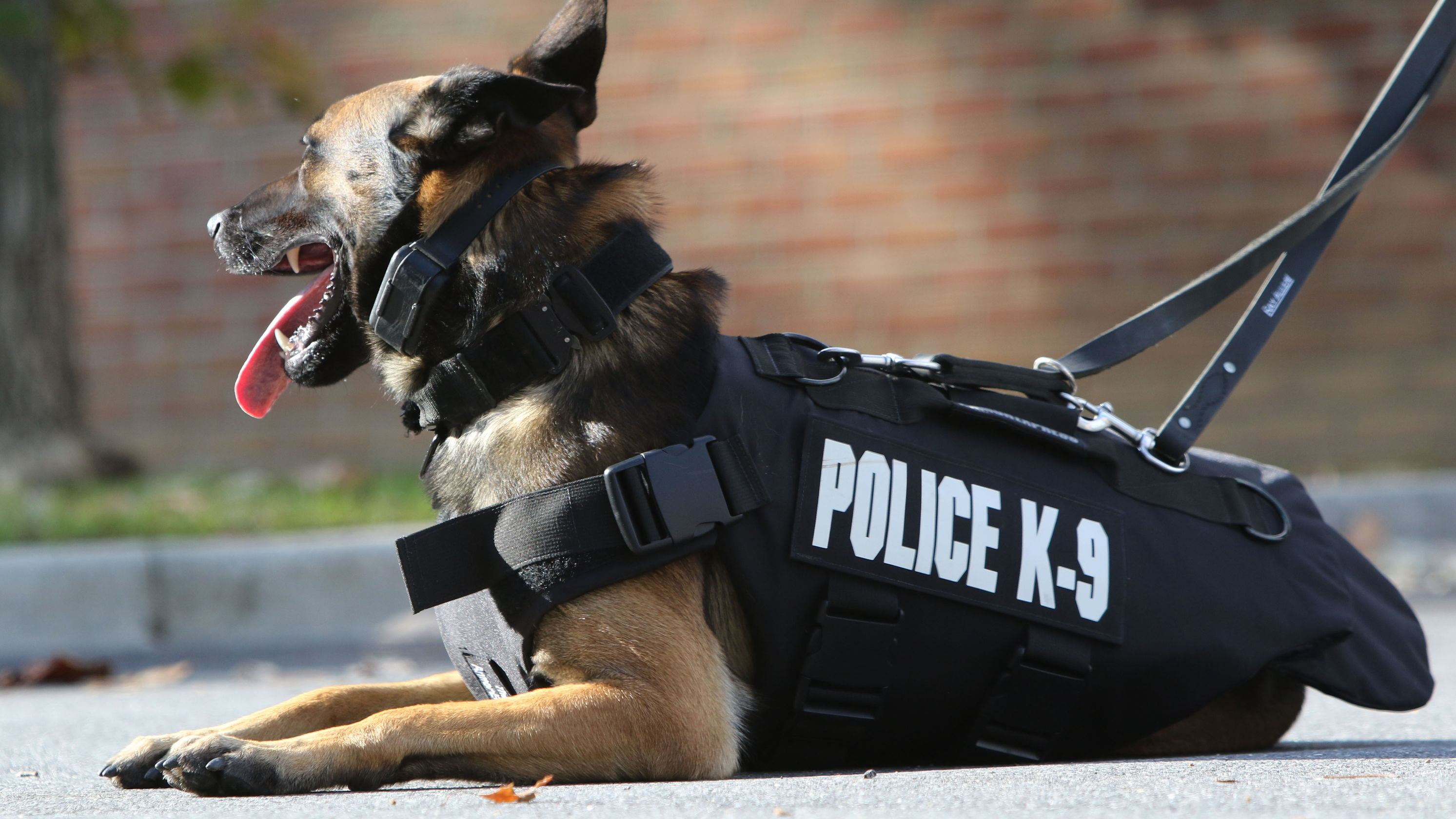 California News: K-9 helps subdue suspect after chase, standoff on 15 Freeway in Ontario (video)