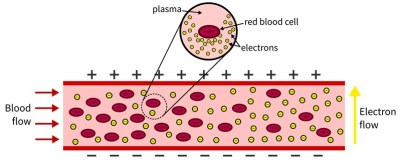 This diagram depicts the way conductivity will change as blood cells break. The yellow dots represent electrons. The red circles represent blood cells. Viewing the graphic from left to right, one can see that when more blood cells are present, fewer electrons are able to get across. As blood cells break, there are fewer barriers and the blood becomes more conductive, making it easier for electrons to move from one side to the other.