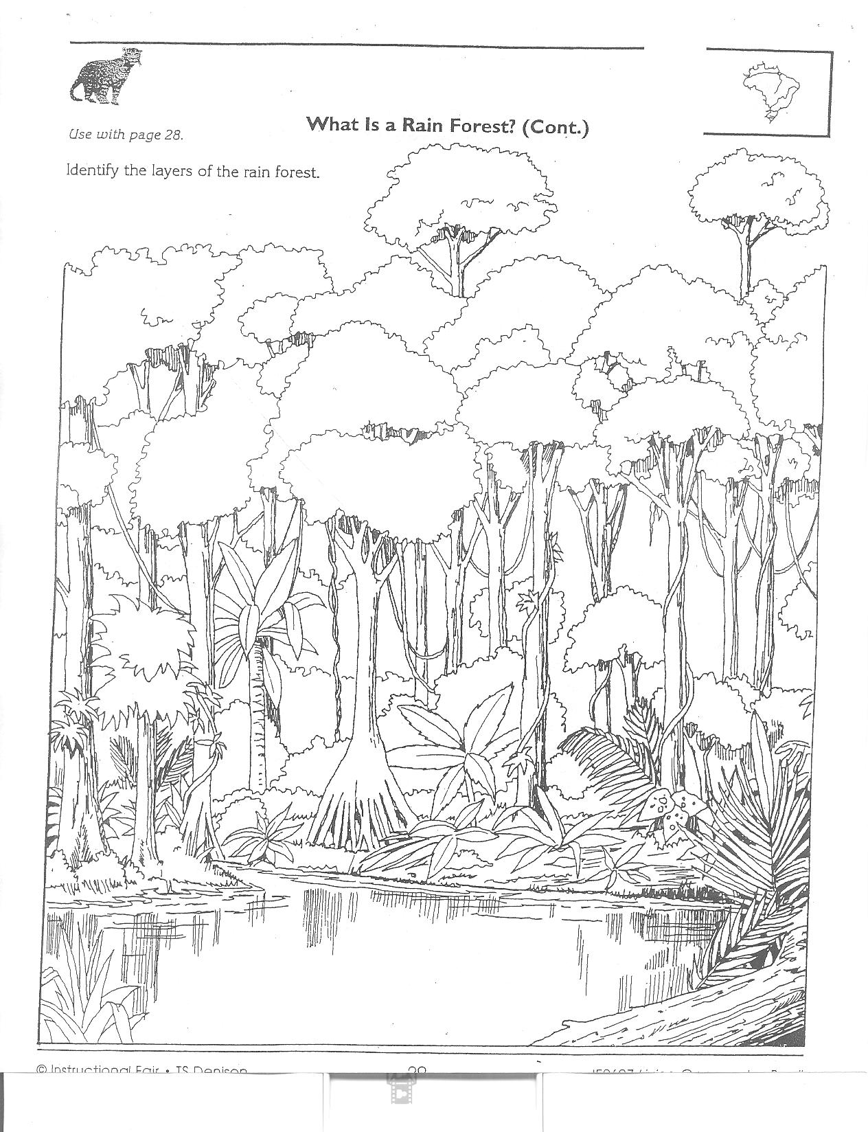 Rain Forest Worksheet