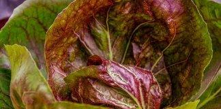 Πως καθαρίζουμε τα φύλλα σαλάτας
