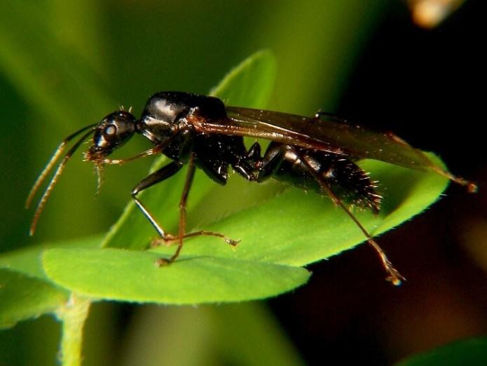 Λίγα για τα μυρμήγκια ξύλου