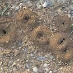 Εξουδετέρωσε τη φωλιά με τα μυρμήγκια