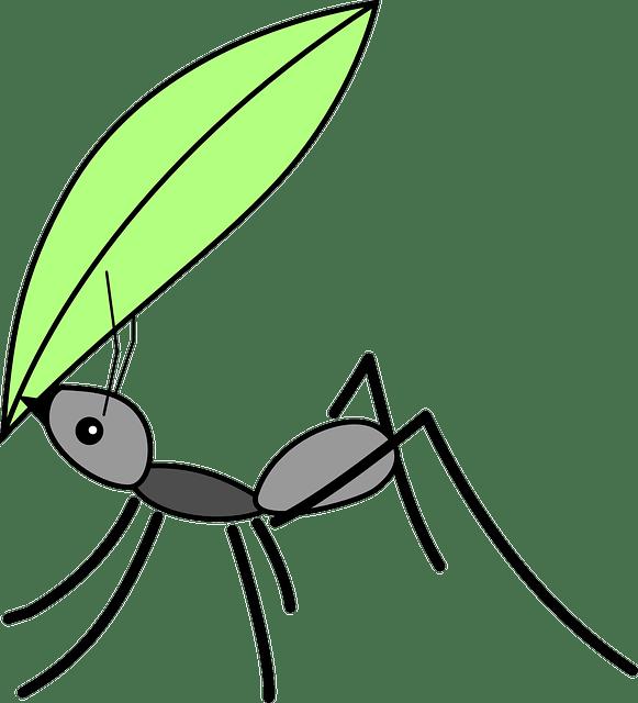 Μ' αυτό το κόλπο, θα τα διώξεις τα μυρμήγκια