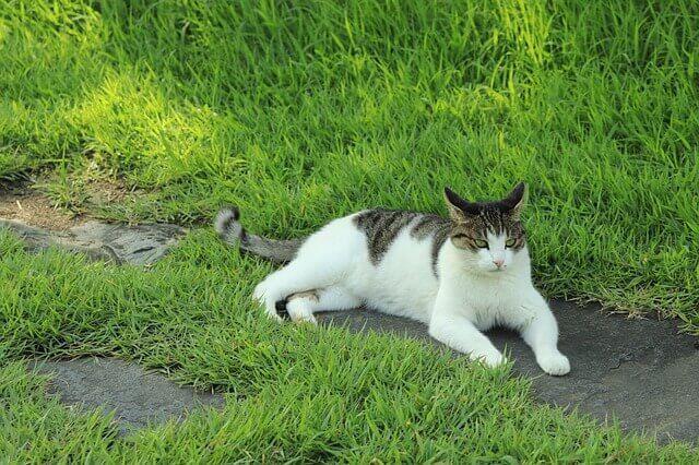 Μήπως οι γάτες της γειτονιάς 'ανακουφίζονται' στο γκαζόν σας;