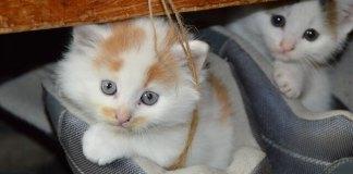 Η τρυφερή ιστορία πίσω από τα 2 γατάκια