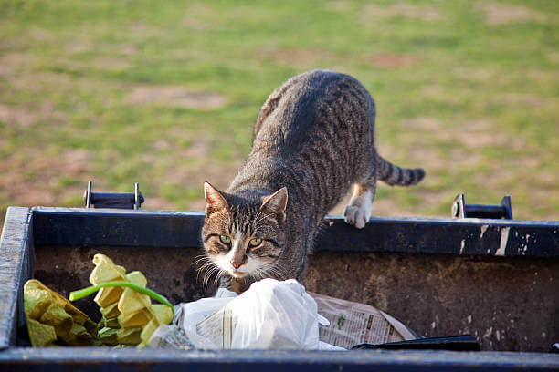 Πως θα απωθήστε τις γάτες από τα σκουπίδια σας