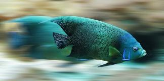 Μυρίζει ψαρίλα το ψάρι;