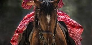 Τι σημαίνει αν ονειρεύτηκες άλογο;