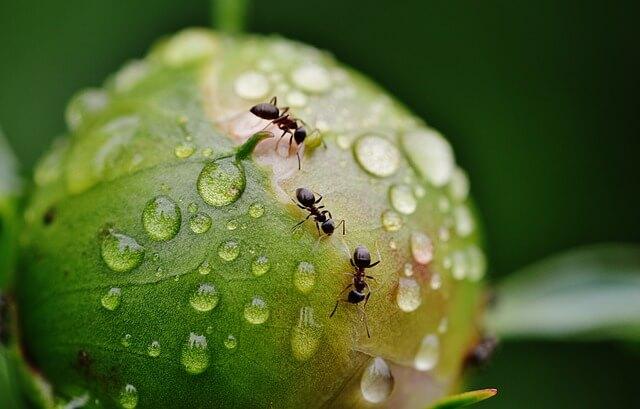 Ετσι διώχνουμε τα μυρμήγκια από τα φυτά