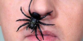 Τι κάνεις αν μπει έντομο στη μύτη;