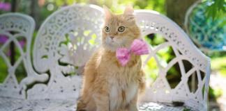Μυρίζουν οι ακαθαρσίες της γάτας;