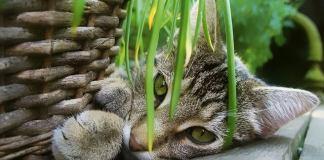 Η γάτα που κάνει τον κήπο μαντάρα